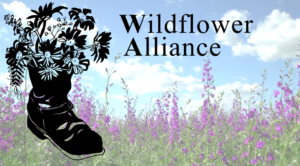 Wildflower Alliance (formerly known as Western Mass Recovery Learning Community)